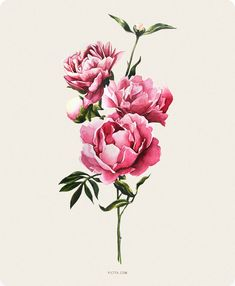 Painting Ideas Watercolor Ink 53 Ideas For 2019 Illustration Blume, Watercolor Illustration, Painting Illustrations, Watercolor And Ink, Watercolor Flowers, Peony Painting, Ink Painting, Peonies Tattoo, Arte Floral