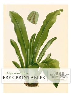 Ten free printable scientific plant illustrations | The Painted Hive
