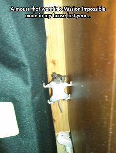 Mission Impossible? How about Mouse-ion Impossible? <------- that comment