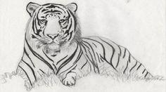 Tigre. Dibujo a Lápiz.  Carina Malarchia