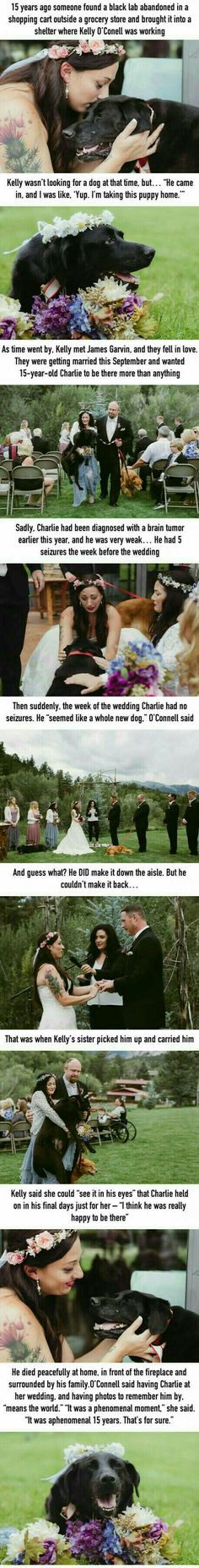 This here so sad dog died but it got to see his human get married This Dog Lived Just Long Enough To See His Human Get Married>>>>>And im crying great thx.MY HEART Cute Stories, Beautiful Stories, Animals Beautiful, Sad Dog Stories, Awesome Stories, Sweet Stories, Animals And Pets, Baby Animals, Funny Animals