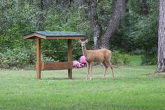 Deer feeder so we can get deer to hang out around our cabin.