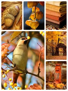 Photo Collages, Beautiful Color Combinations, Beautiful Words, Mood Boards, Color Inspiration, Photo Puzzle, Christmas Cards, Palette, Aesthetics