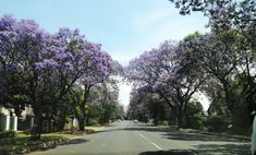 #southafrica #johannesburg #jacarandatrees #nature South Africa, Country Roads, Nature, Photos, Life, Naturaleza, Pictures, Nature Illustration, Off Grid