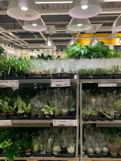 Everything to Know About IKEA's Plant Department