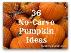 36 No-Carve Pumpkin Ideas