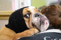 Nicola Newey-Burridge's dog Lucy #PreciousPet of #April #PoM
