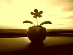 my little dancing flower (solar powered)...goes on all my road trips with me!