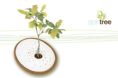 If You Liked the 'Bios Urn,' You'll Love 'The Spirit Tree' Design for Good Big Think - a great after life alternative! Not trying to be morbid, but it happens to everyone. Green Funeral, Container Design, After Life, Cremation Urns, New Green, Tree Designs, Natural Life, Garden Inspiration, Biodegradable Products