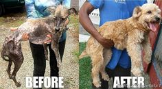 People who rescue animals in need are the heroes of this world !!!!! pic.twitter.com/84AiywHyGo