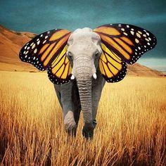 Robert Jahns ~ Butterphant?? ✿⊱╮
