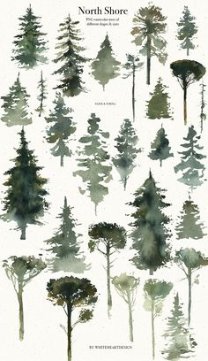 North Shore storyteller is a vintage book style watercolor collection of illustrations, which created to help you to tel Tree Watercolor Painting, Watercolor Painting Techniques, Watercolour Tutorials, Watercolor Flowers, Painting & Drawing, Simple Watercolor, Tattoo Watercolor, Watercolor Animals, Abstract Watercolor