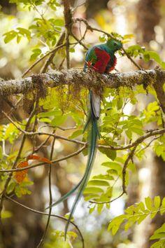 500px / Resplendent Quetzal by Álvaro Cubero Vega