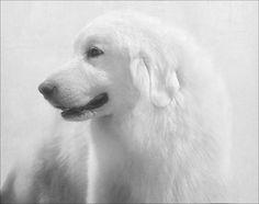 White on White by Bob Yankle White Photography, Polar Bear, Bob, Black And White, Animals, Animales, Black N White, Animaux, Bob Cuts