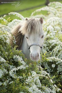 More adorable than a horse? A MINIATURE horse!