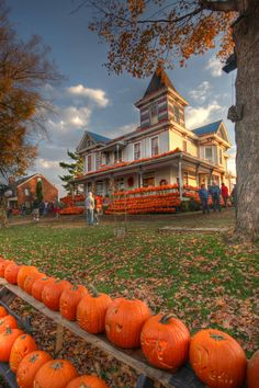 This is an awesome story of a West Virginian man who, along with volunteers, carves over 3,000 pumpkins and display them on his house every Halloween. Ric Griffith, the man behind the famous Kenova Pumpkin House, has carved over 25,000 pumpkins since 1978. Every year, he puts thousands of carved jack-o'-lanterns on the porch, roof, and yard of his 115-year-old Victorian house. It's kind of like a pumpkin wonderland.