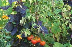 Un potager bio facile à cultiver