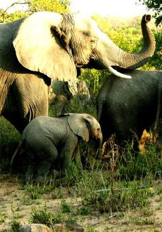 Elephants On The Move, Sabi Sand Game Reserve