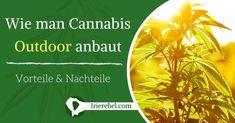 Es macht schon fast den Anschein, das der Anbau von Cannabis Outdoor, also im Freien, mit gewissen Herausforderungen und Risiken verbunden ist, weshalb einige Züchter es vorziehen, Indoor anzubauen…Mehr Cannabis, Outdoor, Movie Posters, Movies, Benefits Of, Challenges, Tutorials, Garten, Outdoors