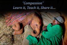 https://www.facebook.com/wildlifeatheart/photos/a.489824864456563.1073741828.489798247792558/681534135285634/?type=1