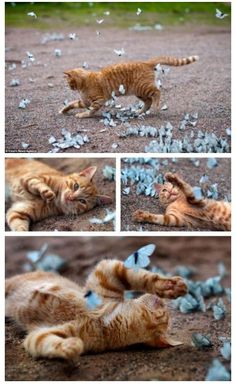 Kitty playing in field of butterflies