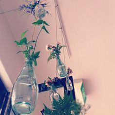 Recycled glass bottles turned into hanging vases Bottle Vase, Bottles And Jars, Hanging Vases, Hanging Plants, Bottle Chandelier, Recycled Glass Bottles, Glass Ceramic, Flowers Nature, Crafts To Do