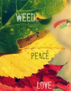 Love to smoke weed in peace - www.delta9cloud.com