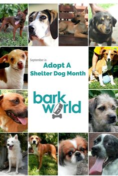 It is Adopt a Shelter Dog Month.  These dogs are all waiting for their forever homes at the Pet Fur People in Tyler Texas