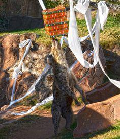 Nadie se quedó sin su regalo de Reyes en Bioparc Valencia