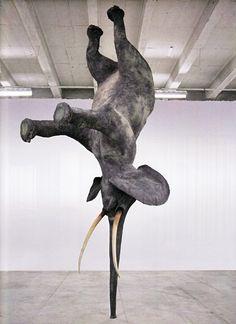 Elephant - Daniel Firman