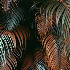 via: @kahrigolden _______________________ #plantsinfocus _______________________ #tropicalplants #greenhouse #glasshouse #botanicalpickmeup #urbanjunglebloggers #urbanjungle #vscoplants #plantspo #plantlife #botanical #instaplant #plantstagram #jungalow #plantsarefriends #cactus #botanicalgarden #jungalowstyle #jungle #planta #plantstrong #palms #plantsofinstagram #greenplant