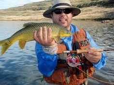 For the best trout fishing in Southern Africa, try the rivers of the Maloti Drakensberg Route in South Africa and Lesotho Yellow Fish, Kwazulu Natal, Sport Fishing, Trout, Rivers, South Africa, Southern, Old Things, Brown Trout