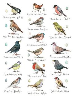Garden Birds by Madeleine Floyd Bird Drawings, Animal Drawings, Drawing Sketches, Drawing Birds, Bird Illustration, Illustrations, Lapin Art, Bird Sketch, Bird Artwork