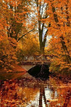 Осень - это Рыжая Красавица. Обсуждение на LiveInternet - Российский Сервис Онлайн-Дневников