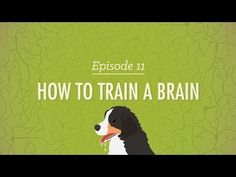 Yes and Yes- You Tube channels to follow- How to Train a Brain - Crash Course Psychology #11