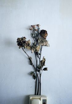 dried flowers as single decoration: a second idea for the single decoration on a table. They could be colorless and standing up straight or drooping and maintaining it's color. Wilted Flowers, Dried Flowers, Dead Alive, Yennefer Of Vengerberg, Flower Aesthetic, Natural Forms, Still Life Photography, Wabi Sabi, Flower Power