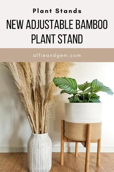 Plant Stands #plant #plantstand #interiorplant #houseplant Modern Plant Stand, Plant Stands, Bamboo Plants, Potted Plants, Indoor Planters, Interior Plants, Houseplant, Diy Projects, Wood