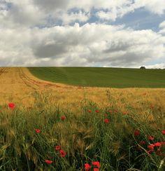 Paysage avec coquelicots by raym5, via Flickr ~ Marie Chidrac, Auvergne, FR