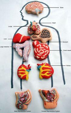 Anatomical #macarons make #bloody #FoodArt - Read more: http://www.finedininglovers.com/blog/curious-bites/anatomical-macarons/