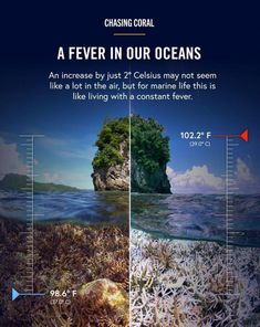 Save Our Earth, Save The Planet, Global Warming Issues, Marine Biology, Environmental Science, Marine Life, Planet Earth, Mother Earth, Climate Change