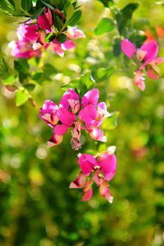 Pretty in pink flowers. Photo by Mademoiselle Mermaid.