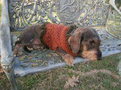 maglione per bassotto... ovvero il magliotto