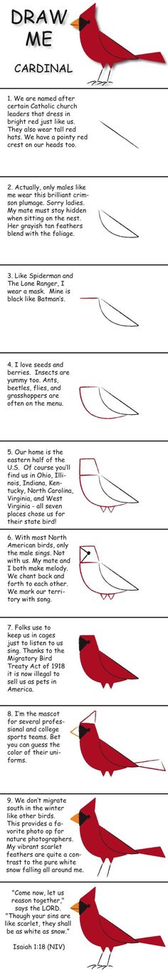 Draw a cardinal in 10 easy steps and learn fun facts about its life. © 2013 Marty Nystrom by Fro