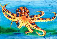 Blue Ringed Octopus Painting by Peter-James-Wilson