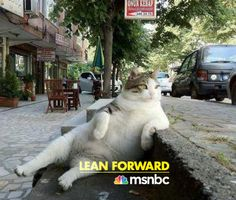 MSNBC Lean Forward... like a fat cat on a curb