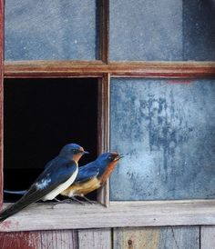 birds on windowsill