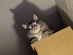 Devil cat casts his discontent upon us - http://cutecatshq.com/cats/devil-cat-casts-his-discontent-upon-us/