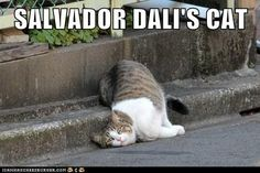 Salvador Dali's Cat - LOL!!!