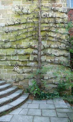 Great Dixter espalier, Kendra Wilson.                  love the stairs