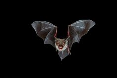 15 Astonishing Facts About Bats | Mental Floss